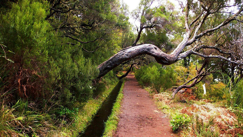 walks-madeira-